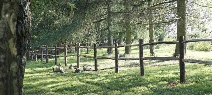 Un matin dans les bois - Vue sur la campagne